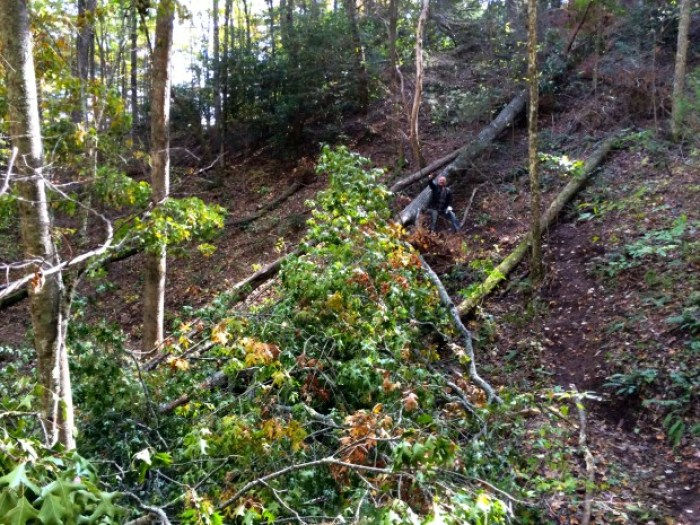 Felled Tree High Shoals Trail