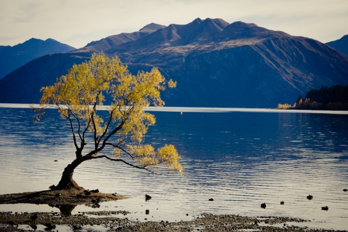 Lake Wanaka - Top 10 New Zealand Road Trip Destinations