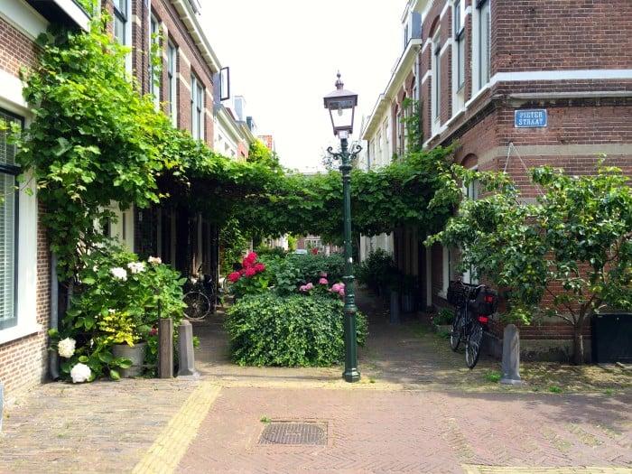 Alley gardens in Haarlem, Netherlands.