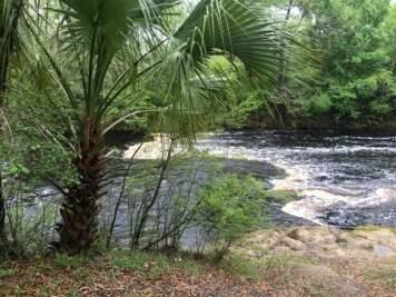 Steinhatchee Falls Florida