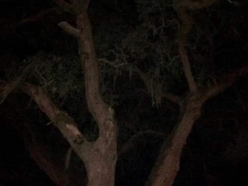 Tolomato Cemetery Tree St Augustine Florida