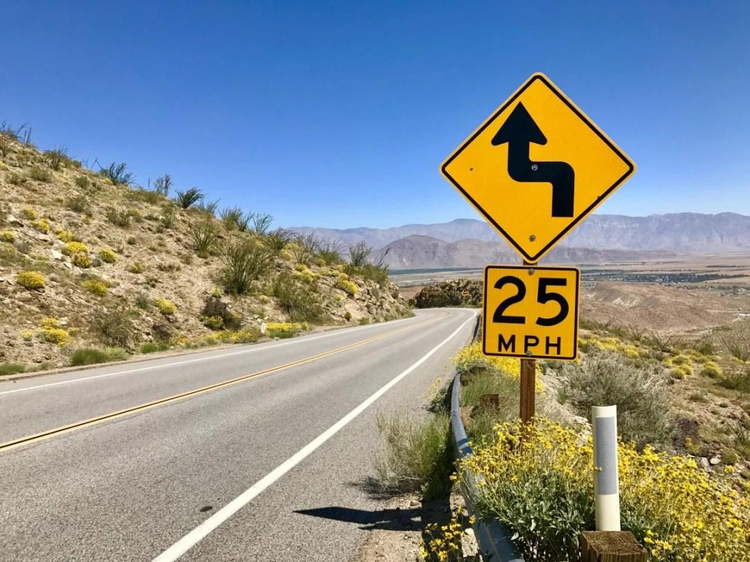 IMG 2206 - Wildflower Chasing at Anza-Borrego Desert State Park California