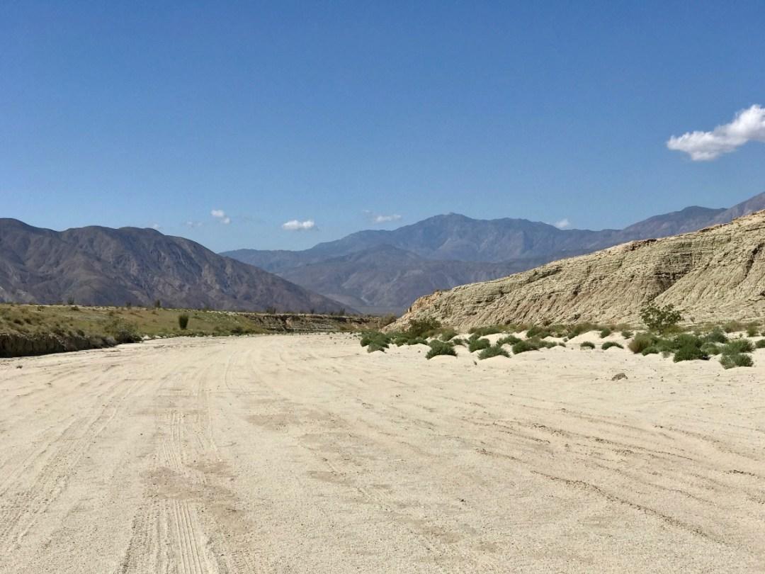 IMG 2280 - Wildflower Chasing at Anza-Borrego Desert State Park California