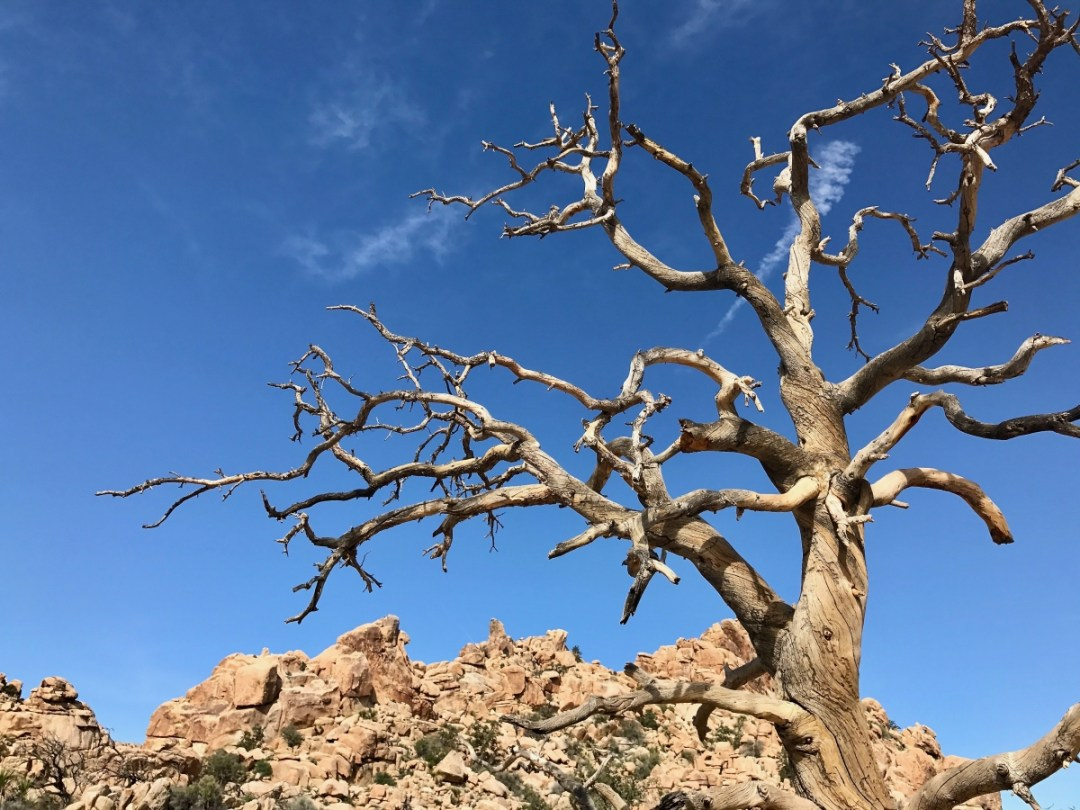 IMG 2416 - Best Hikes in Joshua Tree National Park on a One-Day Trip