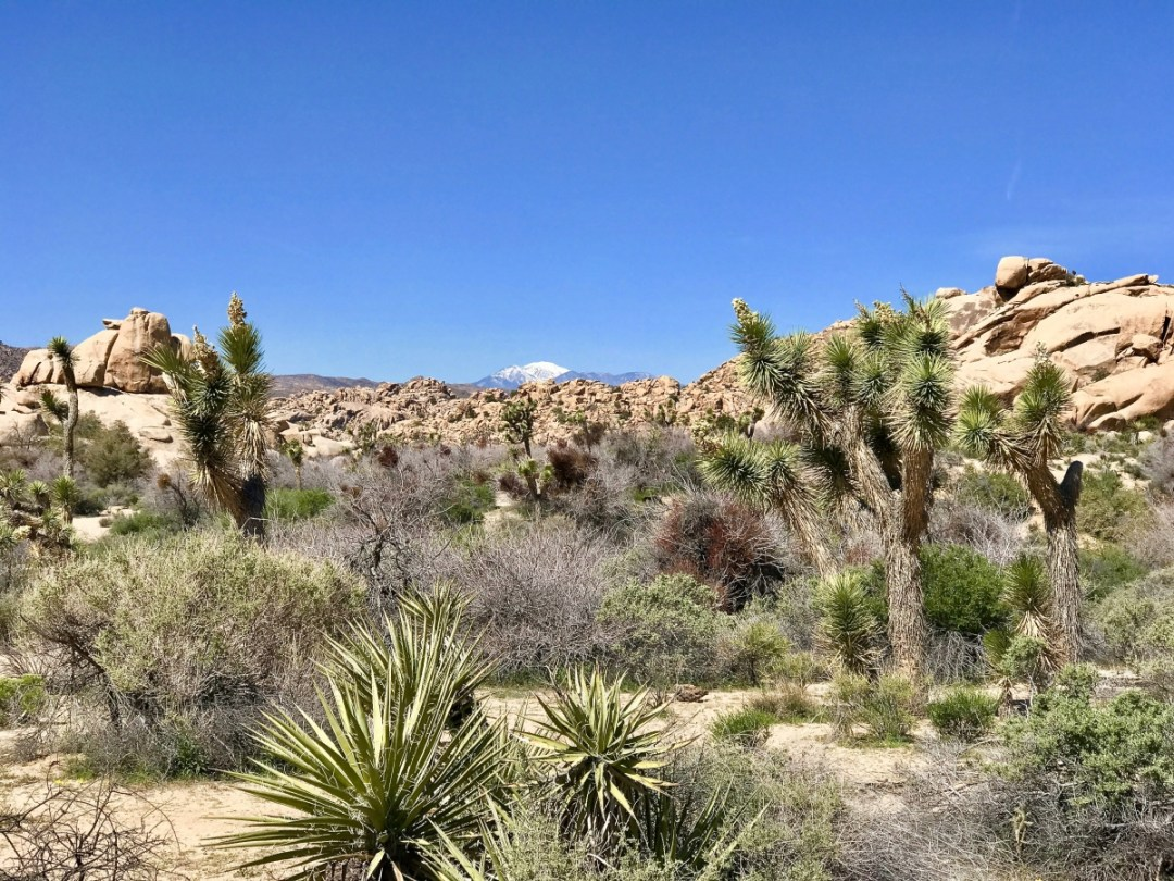 IMG 2471 - Best Hikes in Joshua Tree National Park on a One-Day Trip