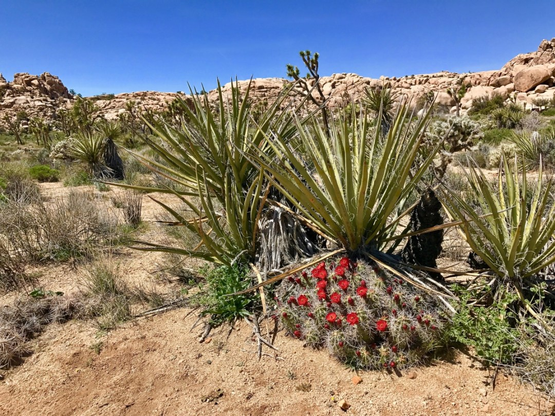 IMG 2532 - Best Hikes in Joshua Tree National Park on a One-Day Trip