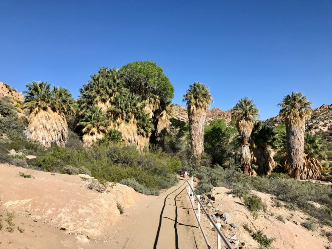 IMG 2599 - Best Hikes in Joshua Tree National Park on a One-Day Trip