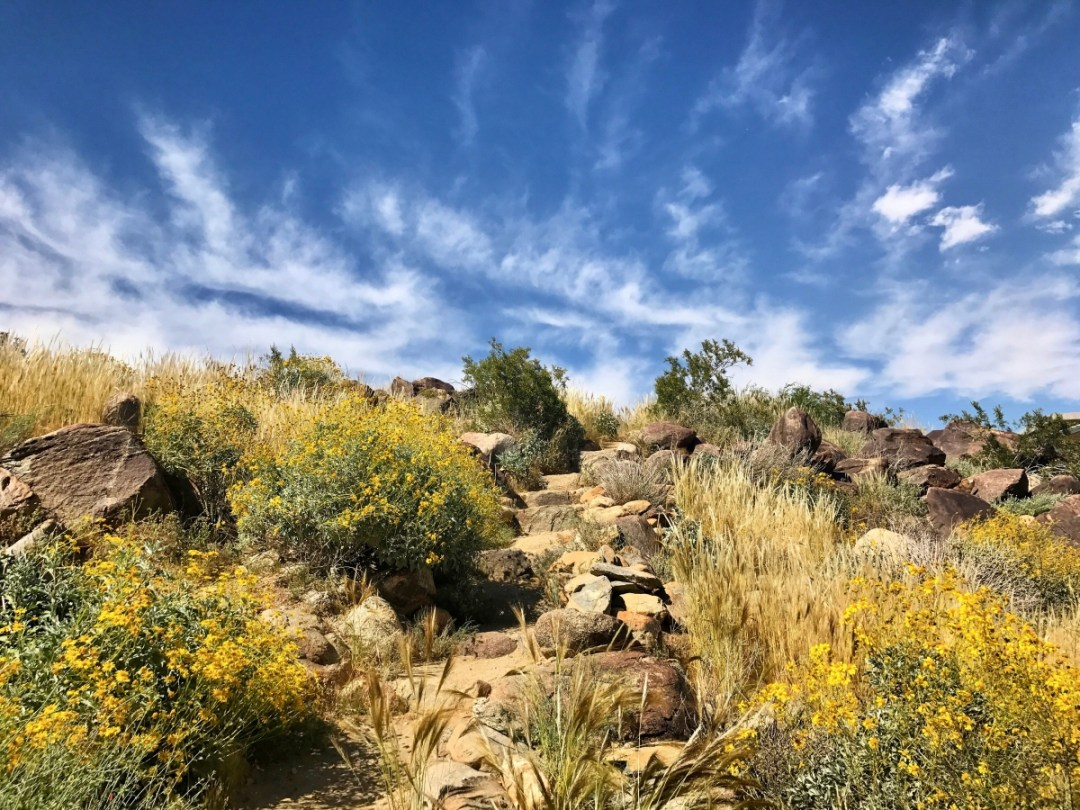 IMG 2741 - Take a Hike up Southern California's Tahquitz Canyon