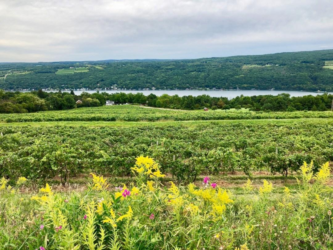 IMG 5497 - A Taste of New York's Finger Lakes Wine Country