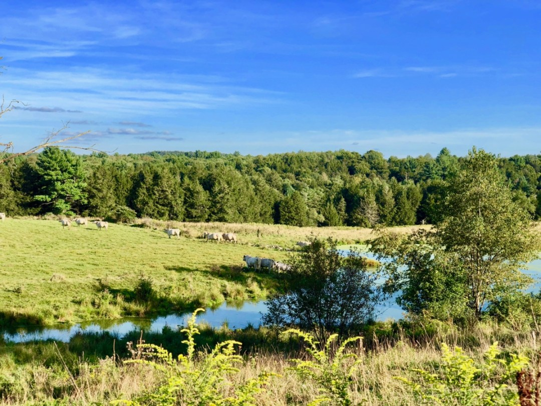 cow pasture - Design Your Own Upstate New York Road Trip