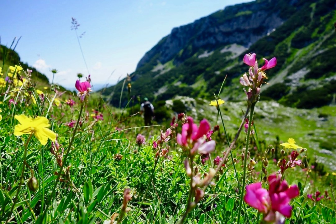 Wild flowers in mountains - Roadtripping, Hiking & Camping Montenegro Best Places