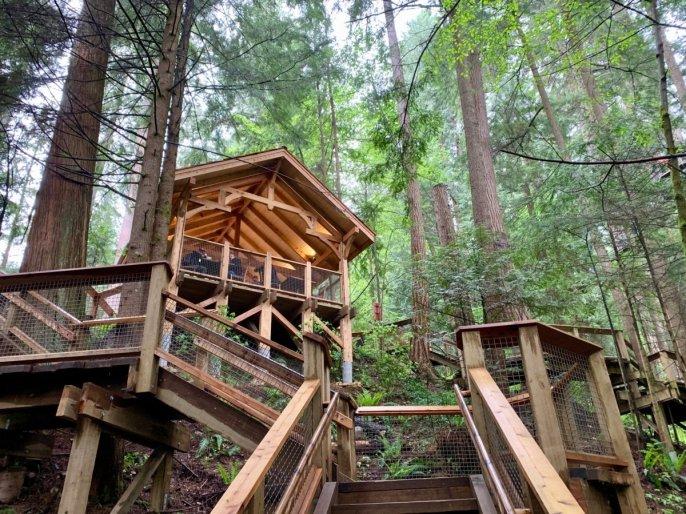 Treetops Treehouse at Capilano Suspension Bridge Park