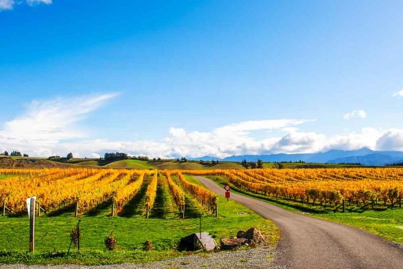 Vineyards through Marlborough wine country