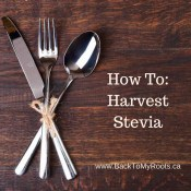 How To Harvest and Dry Stevia