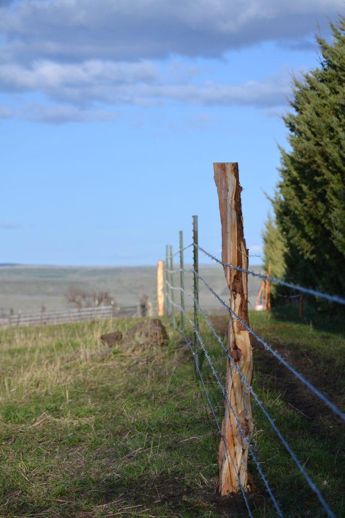 Juniper Fence Post