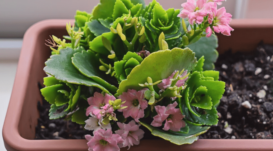The Best Small Indoor Plants Make Your Apartment More Green