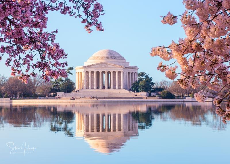 Cherry blossoms surround the Jefferson Memorial in Washington DC