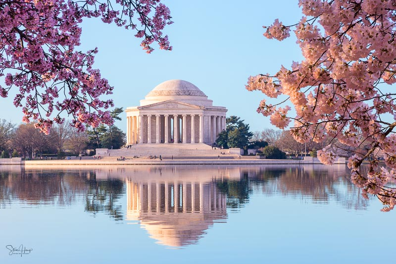 Jefferson memorial at sunrise during Cherry Blossom Festival