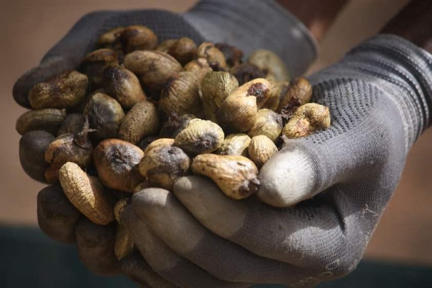 noix de cajou dorées
