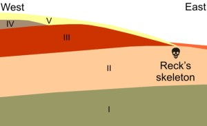The geological stratigraphy of Olduvai Gorge