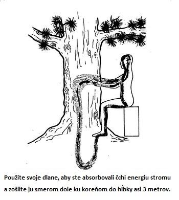 Čchi energia stromov vám môže pomôcť vyliečiť sa. Tvrdia to taoistickí majstri.