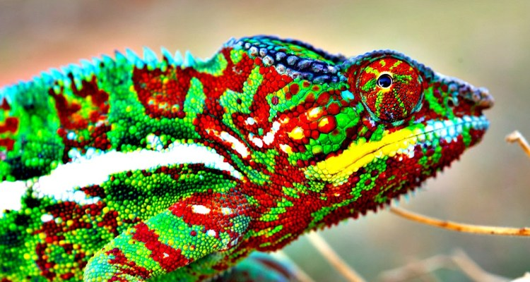 Chameleons Change Color