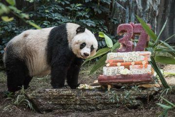 Panda Jia Jia