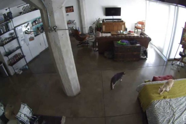 Cat Shuts Up Dog