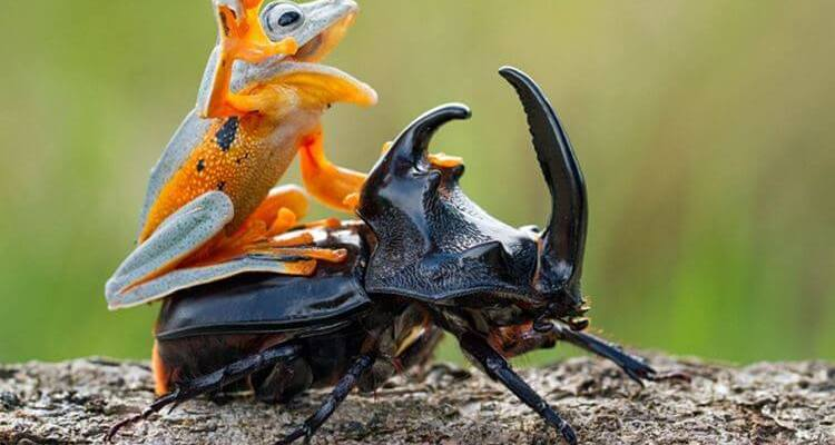 wild animals bugs