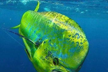 green yellow fish