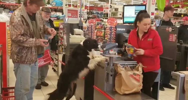 Dog picks out his own Treats