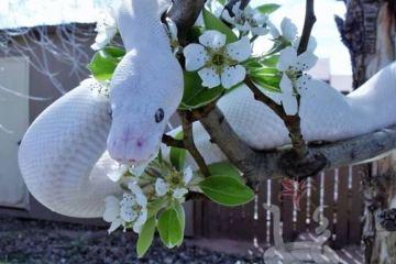 Daily Fresh Baked Randomness (50 Photos) white snake