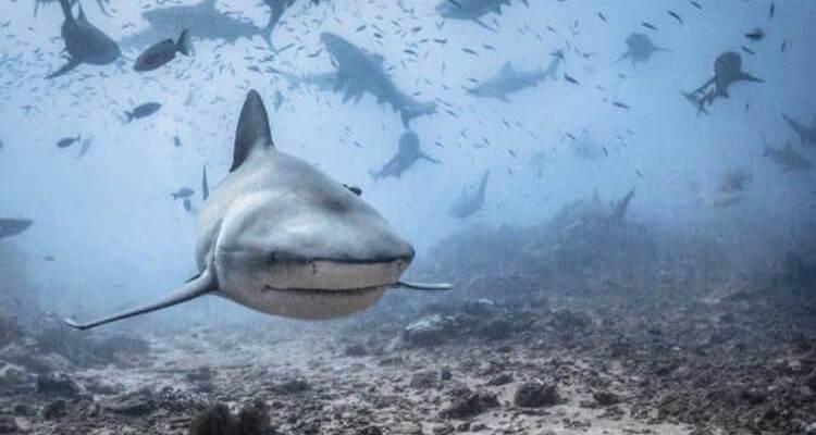 wicked sharks Daily Fresh Baked Randomness (35 Photos) 3