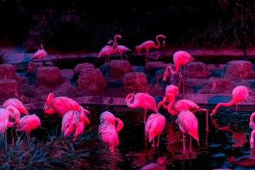 pink flamigos