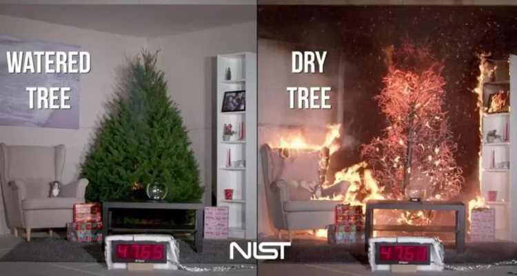 Christmas Tree Fire What will Burn Faster? Watered Tree vs. Dry Tree 2
