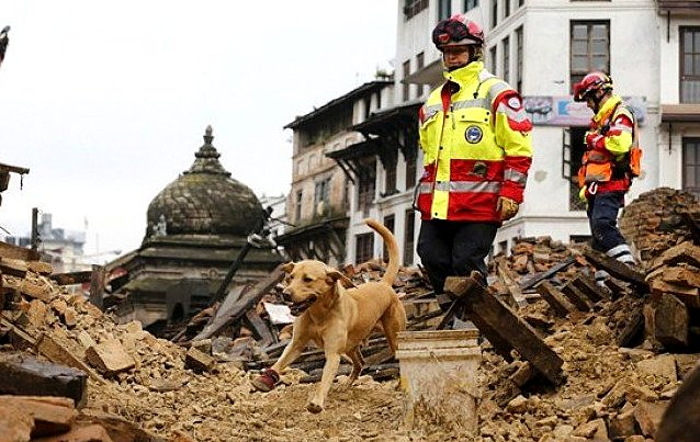 5.1.15-Rescue-Dogs-Are-Saving-Lives-in-Earthquake-Devastated-Nepal7