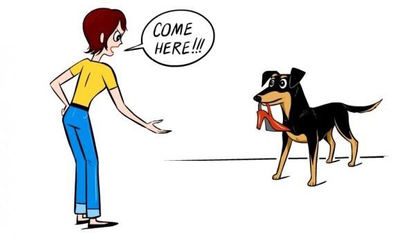DogDecoder_Shoe-e1469633710301-600x342