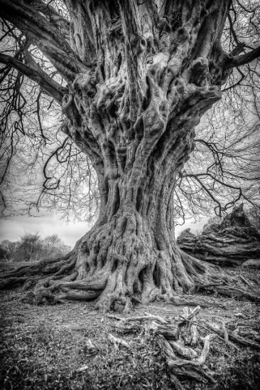 Lava Tree