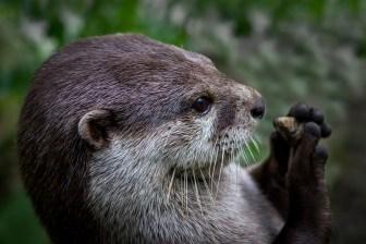Otter & Pebble, Marion Sidebottom, 2014