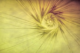 grass-seed-abstract-2016-marion-sidebottom