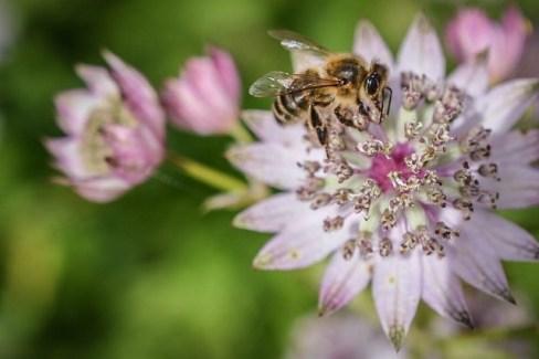 Bee I Think (Karen M)