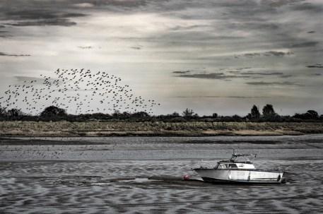 Blackwater Birds - Karen M