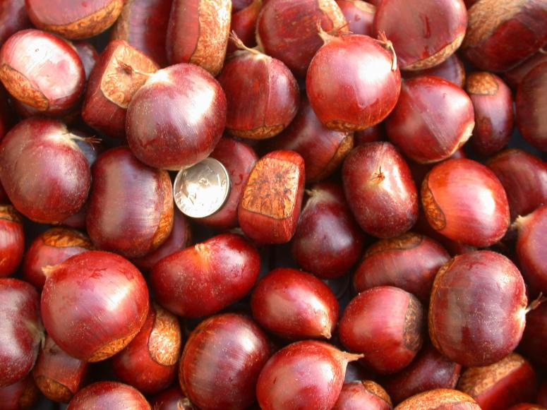 Image result for chestnuts