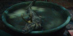 loki alligatore croki