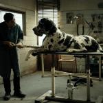 Oscar 2019: è Dogman di Matteo Garrone l'opera in corsa per la candidatura italiana a miglior film straniero