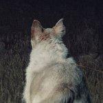 It Comes at Night: qualcosa si nasconde nell'oscurità nell'inquietante poster del nuovo film con Joel Edgerton