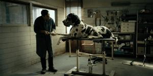 Cannes 71 – Dogman, le prime due clip del film di Matteo Garrone
