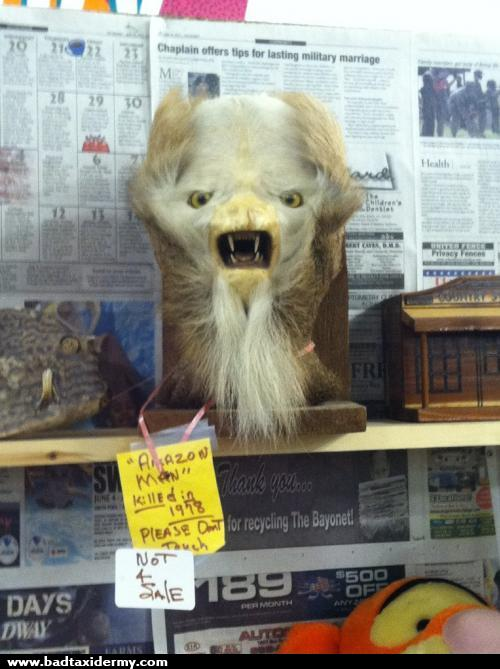 114 Bad taxidermy is the perfect mix of hilarious and terrifying