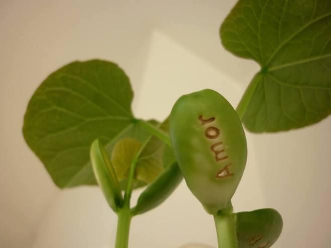 planta magica1