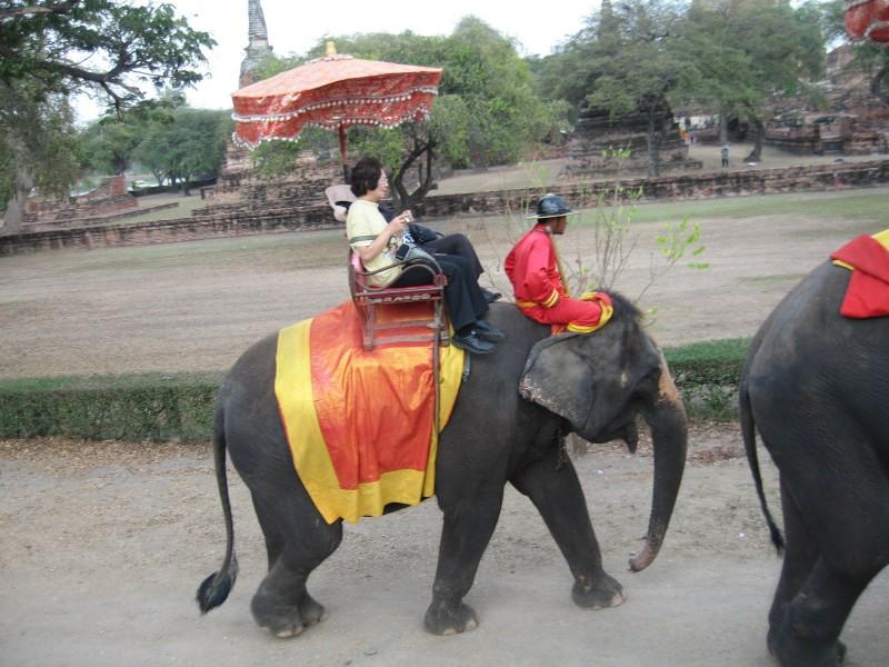 elefantes-ayuthaya